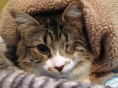 Abused Cat Bindy Is Ready For Adoption Bagheera The